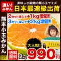 熊本県産 お試し 甘熟みかん 1箱 1.5kg