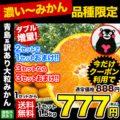熊本 青島系 濃厚な味わい 訳あり大粒みかん 1.5kg